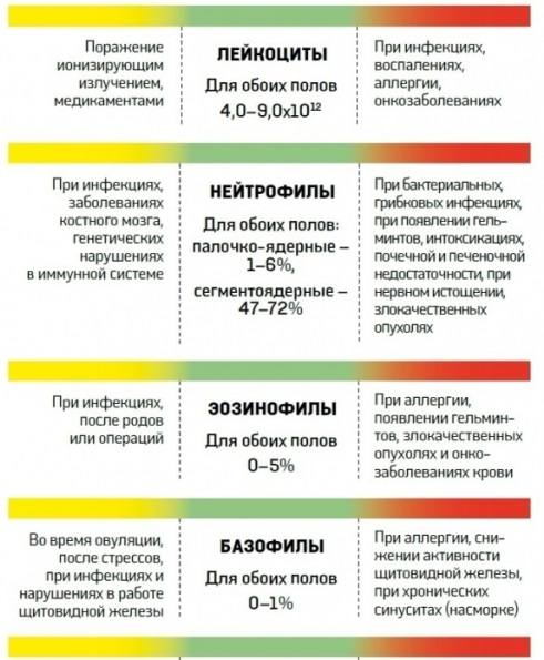 4391866_rasshifrovka_analizov_4 (491x595, 99Kb)