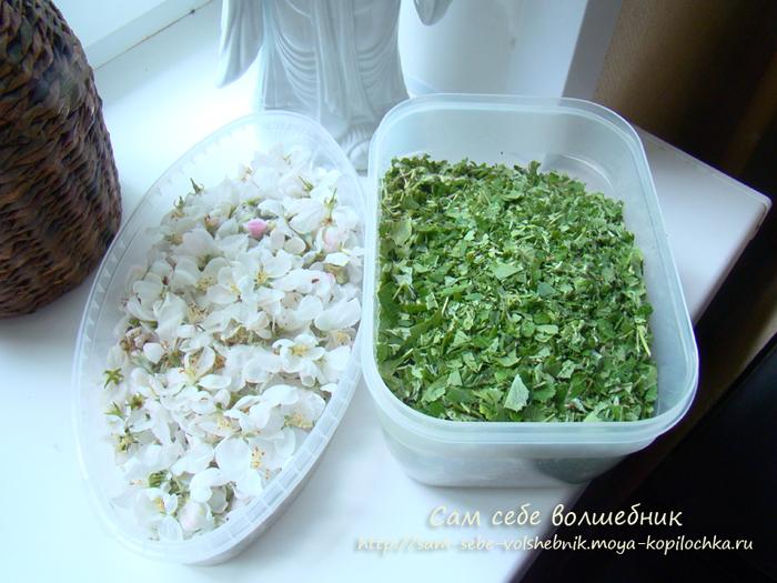 Как приготовить целебный ферментированный чай на зиму/1783336_1 (700x525, 423Kb)