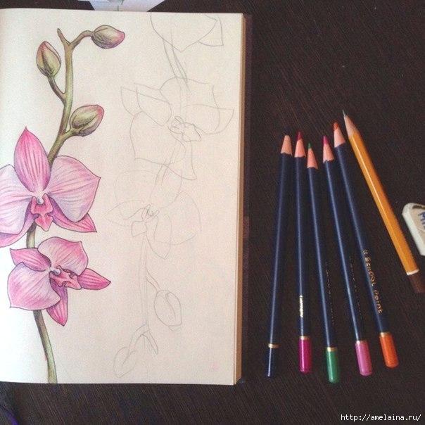Как нарисовать орхидею2 (604x604, 176Kb)