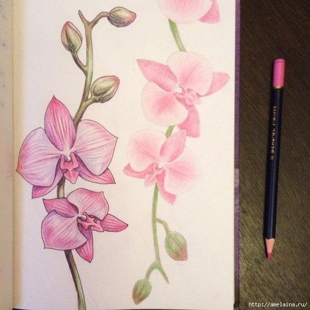 Как нарисовать орхидею5 (604x604, 182Kb)