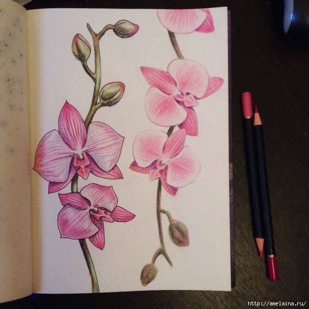 Как нарисовать орхидею7 (604x604, 179Kb)