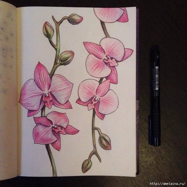 Как нарисовать орхидею10 (604x604, 185Kb)