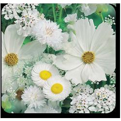 ава_цветок (250x250, 125Kb)