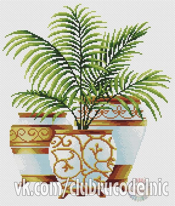 Три пальмы.  Кокос. (592x700, 278Kb)