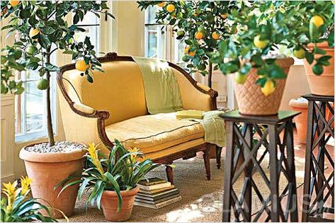 Как вырастить лимонное дерево дома
