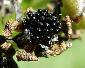 плоды (275x220, 75Kb)