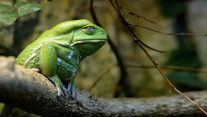 frog-photography-26__880 (700x397, 72Kb)