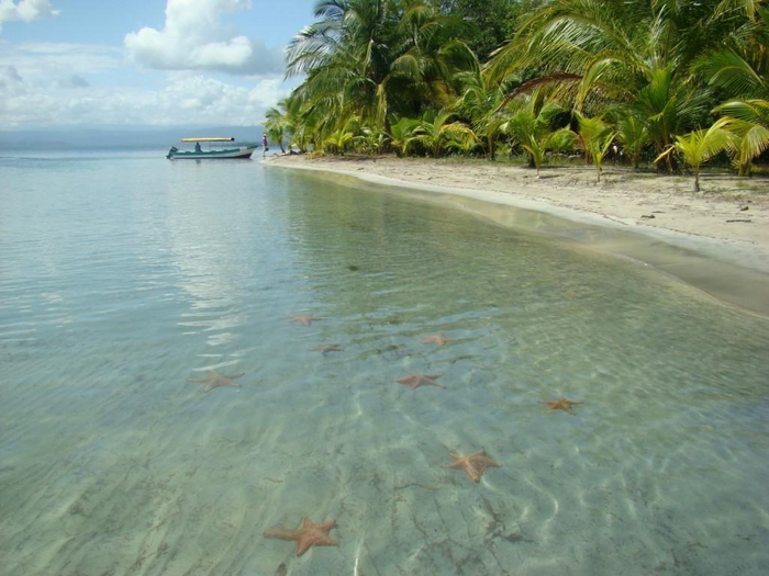 пляж Бока-дель-Драго морские звезды фото 1 (700x525, 322Kb)