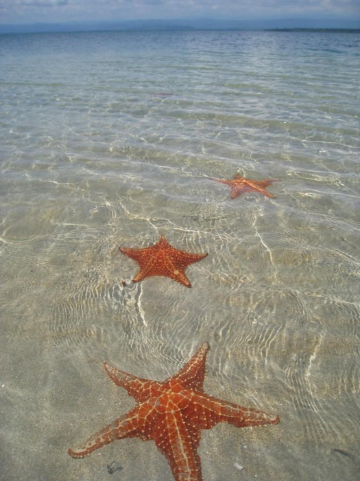 пляж Бока-дель-Драго морские звезды фото 2 (525x700, 341Kb)