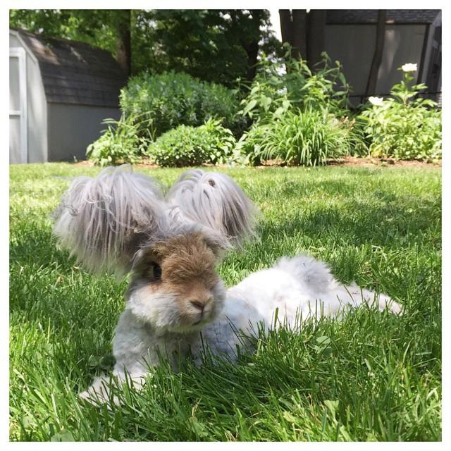 кролик2 (640x640, 469Kb)