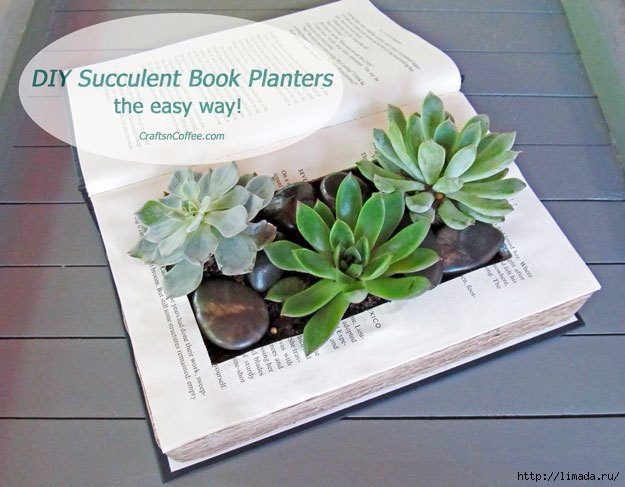 diy-succulent-container-garden-in-a-book (625x487, 171Kb)