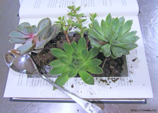planting-succulents (625x448, 157Kb)