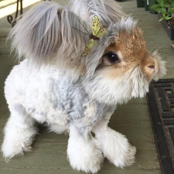 смешной кролик валли 1 (700x700, 383Kb)