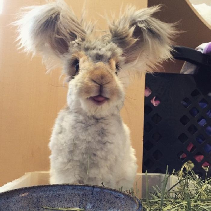 смешной кролик валли 3 (700x700, 393Kb)