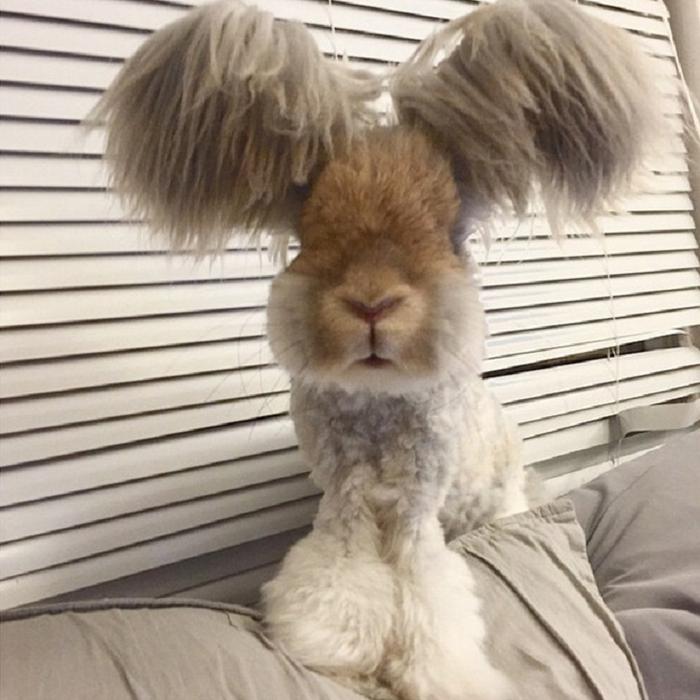 смешной кролик валли 5 (700x700, 358Kb)