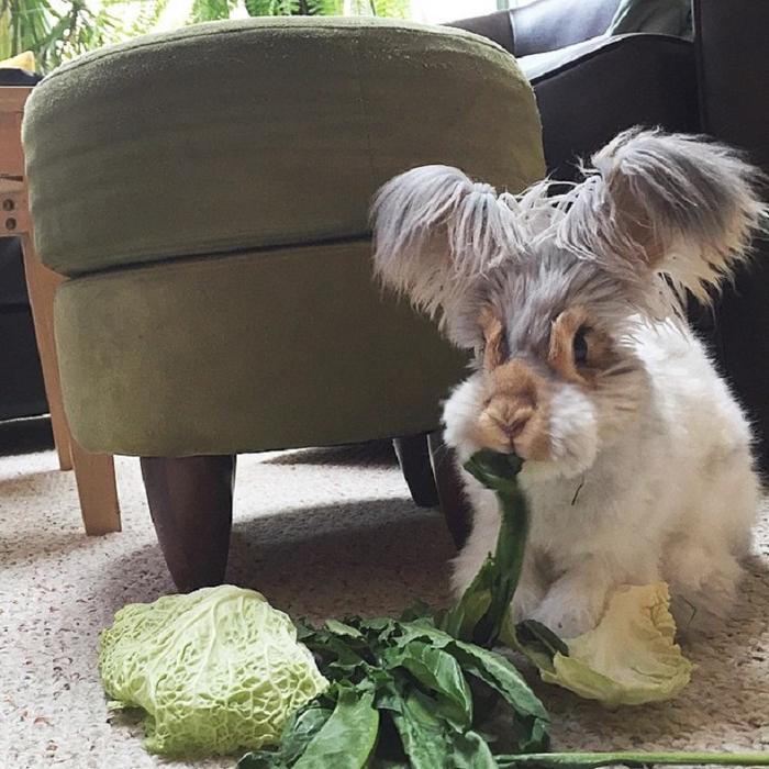 смешной кролик валли 7 (700x700, 444Kb)