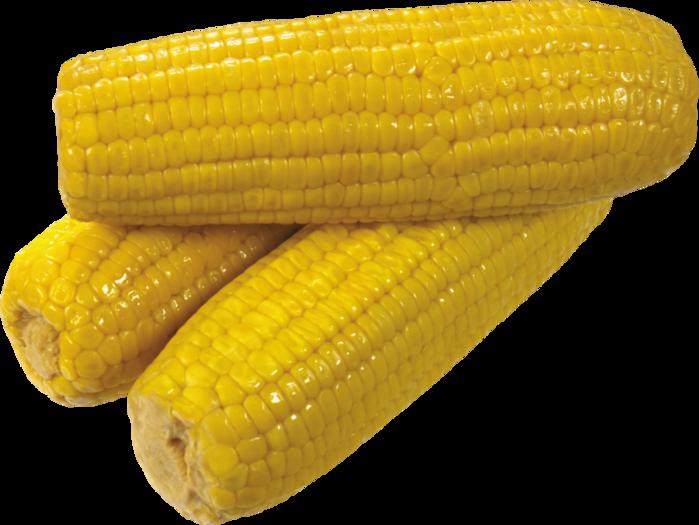 corn_PNG5265 (700x525, 398Kb)