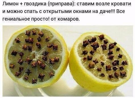5033336_limonchik_i_gvozdichka (475x347, 42Kb)