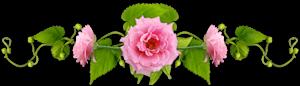 4809770_URoza1_1_ (300x86, 34Kb)