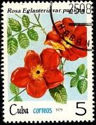 Куба Маки (137x178, 26Kb)