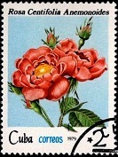 Куба Роза 2 (133x177, 23Kb)