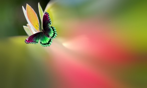 1457985667_butterfly-sitting-on-a-leaf-on-bright-color (600x360, 21Kb)
