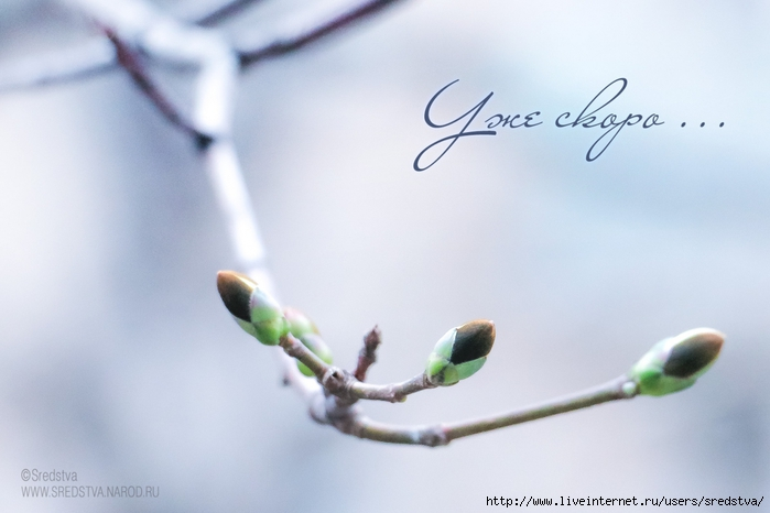 весна, весеннее настроение, настроение, распускающиеся почки, весна на улице, когда придет весна, когда весна, sredstva/3041158_IMG_0813_1 (700x466, 160Kb)