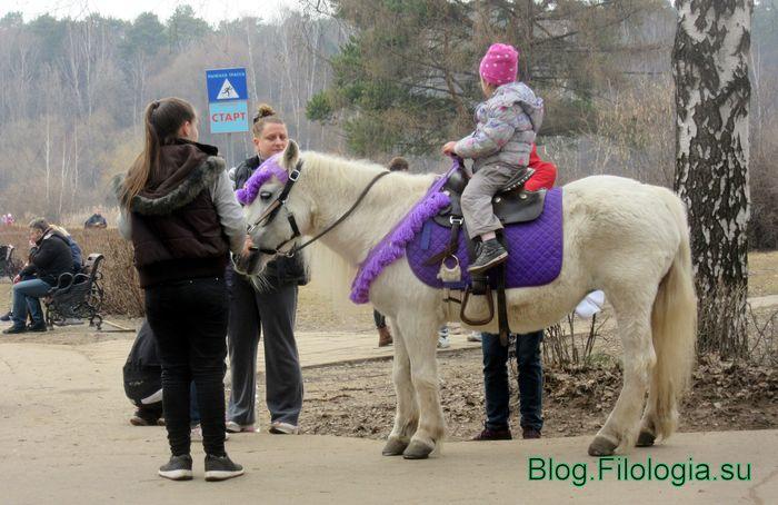 Катание ребенка на лошади (700x454, 64Kb)