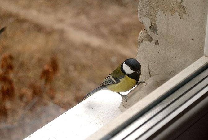 Что значит, когда птица стучит в окно - Что значит?.