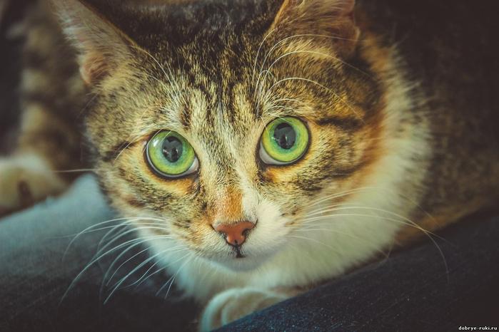 кошка_Матрешка (700x466, 314Kb)