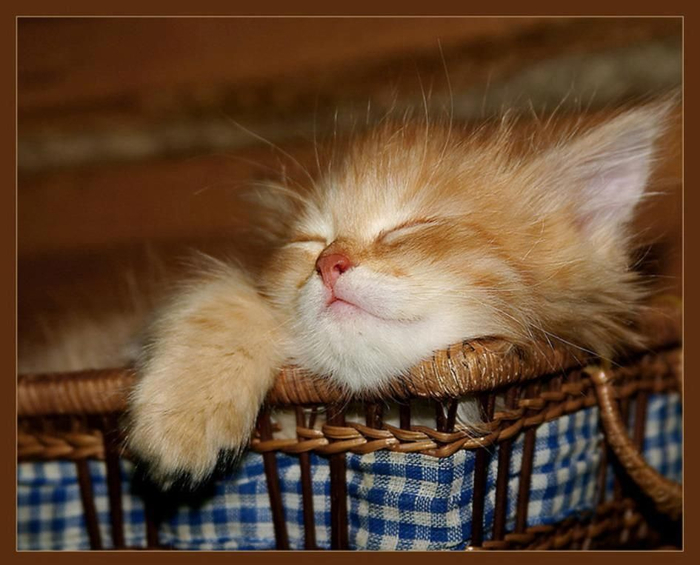 Pictures-of-cats-and-kittens-sleeping-3 (700x565, 321Kb)