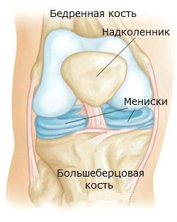 коленка (250x313, 13Kb)