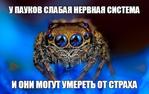 Превью ZNlnI-KMJJ4 (604x382, 148Kb)