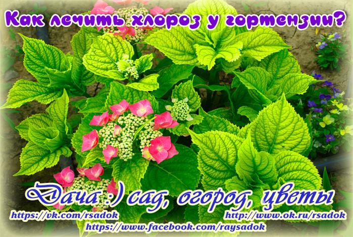 5993110_image (700x468, 629Kb)