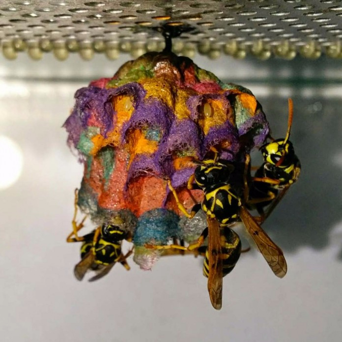 осиное гнездо фото 1 (696x696, 367Kb)