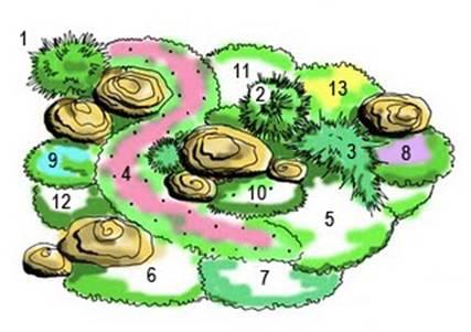 Важное условие - участок должен...  Рис 2. Схема: растения для альпийской горки.