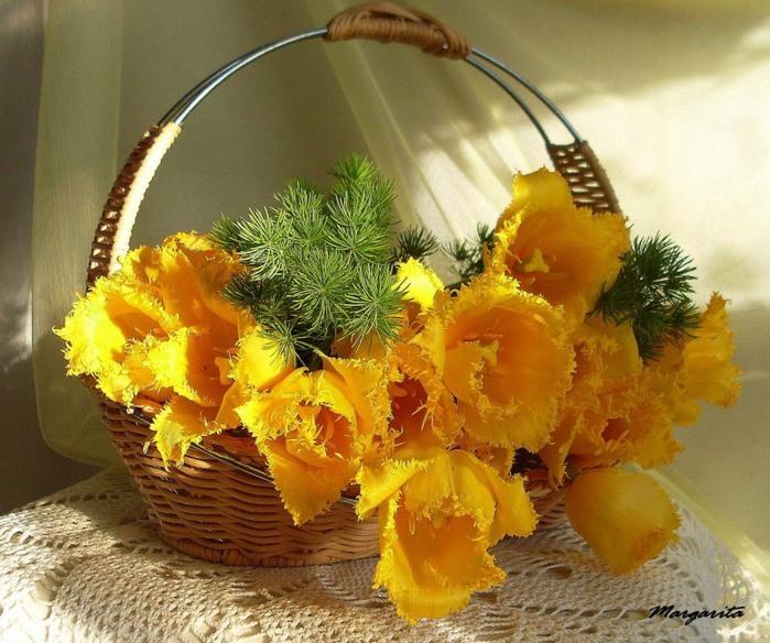 желтые цветы (700x584, 132Kb)