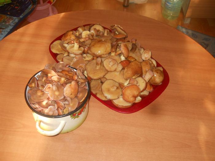 Мазок грибы