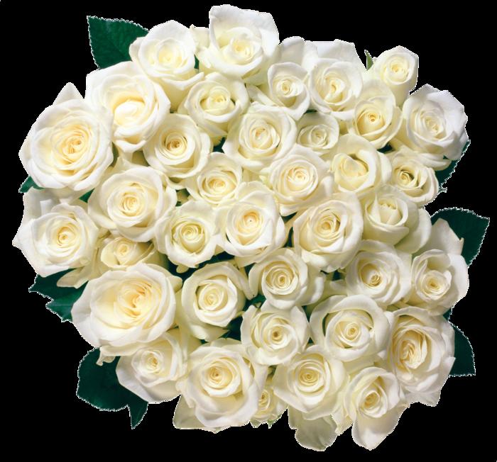 clipart-mnogo-roz (600x552, 636Kb)