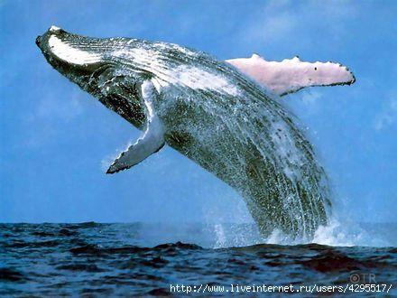 интересное о животных/4295517_1316447137_2 (440x330, 86Kb)