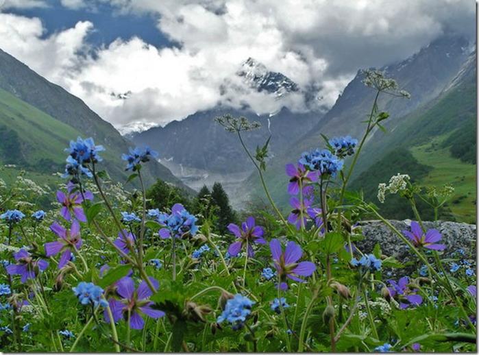 горы цветы55 увел (700x518, 134Kb)