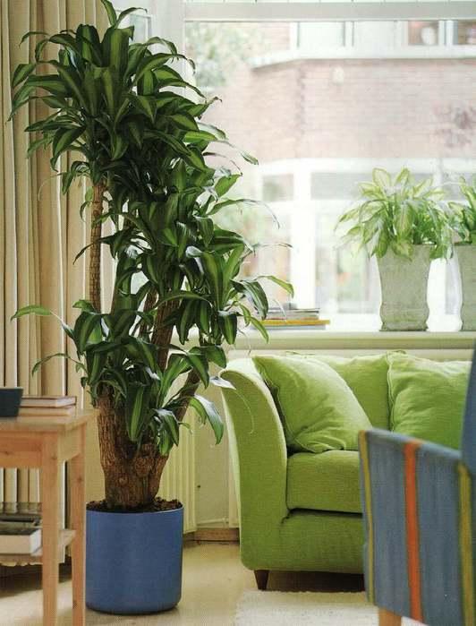 Помимо эстетической нагрузки - украшения и дополнения интерьера, комнатные растения создают