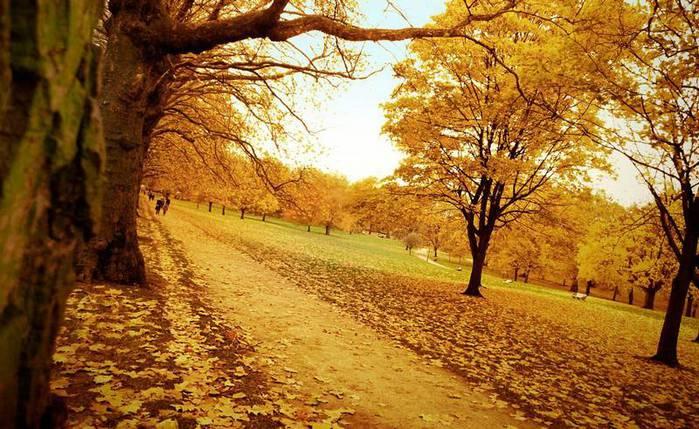 krasivye-foto-oseni_15 (700x429, 80Kb)