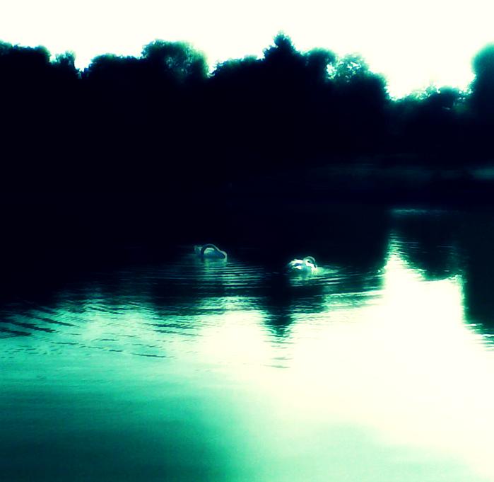 лебеди, парк победы, озеро, одесса
