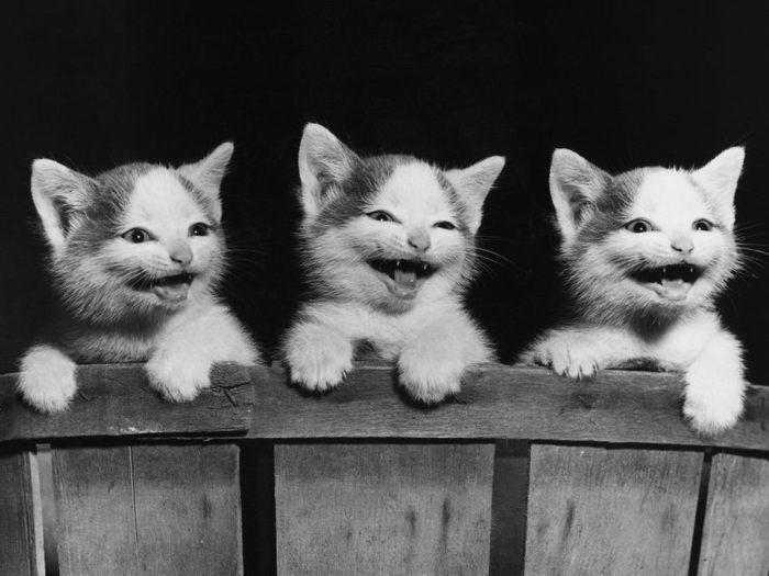 43_wallpaper_cats (700x525, 50Kb)