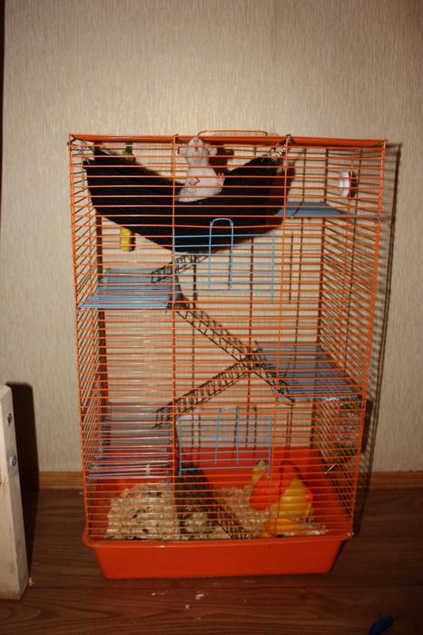 Клетка для крысы как сделать