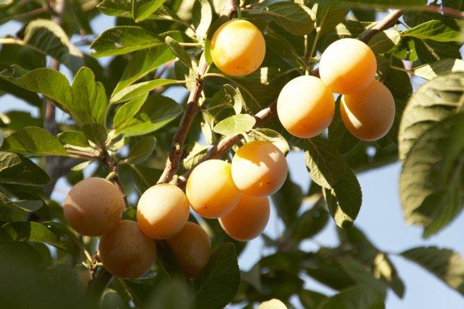фруктово-ягодное настроение 42682