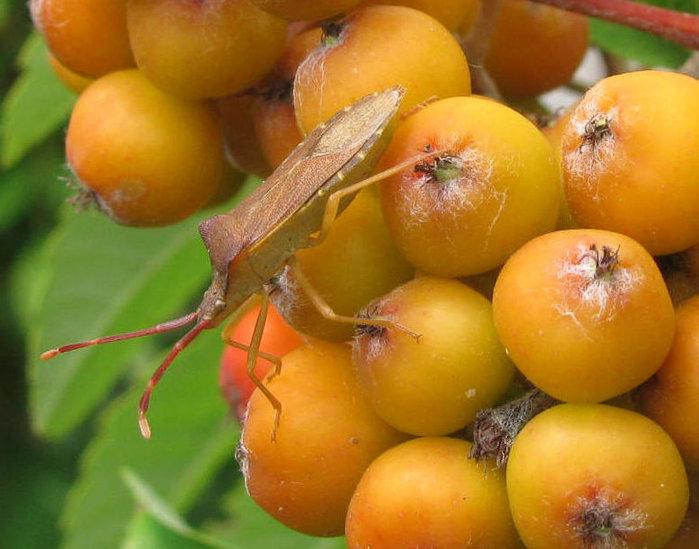 фруктово-ягодное настроение 58249