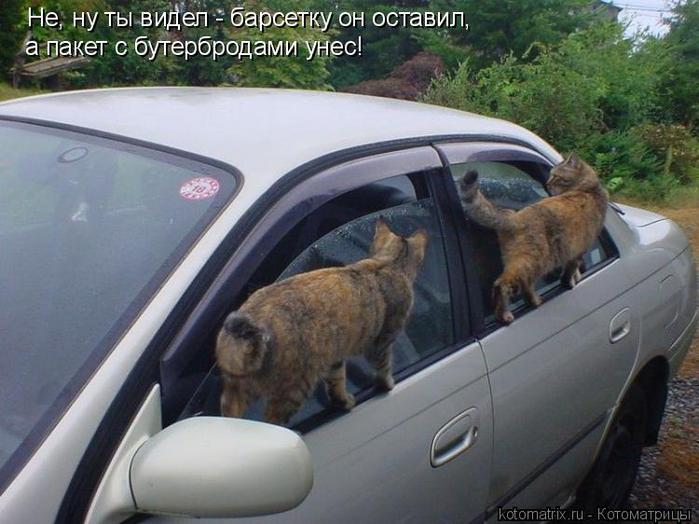 Котоматрица. Акробаты на авто (700x524, 56Kb)