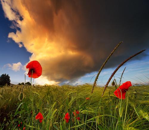 красивые фото природы/3185107_yavlenie (500x436, 148Kb)